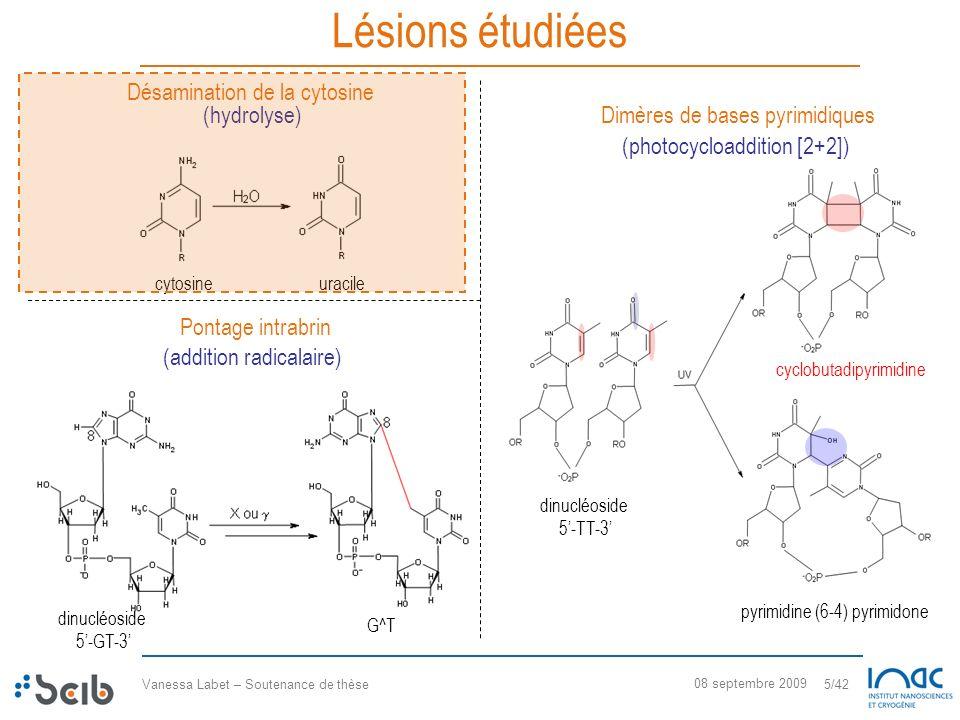 Vanessa Labet – Soutenance de thèse 5/42 08 septembre 2009 Lésions étudiées Désamination de la cytosine Dimères de bases pyrimidiques cytosineuracile