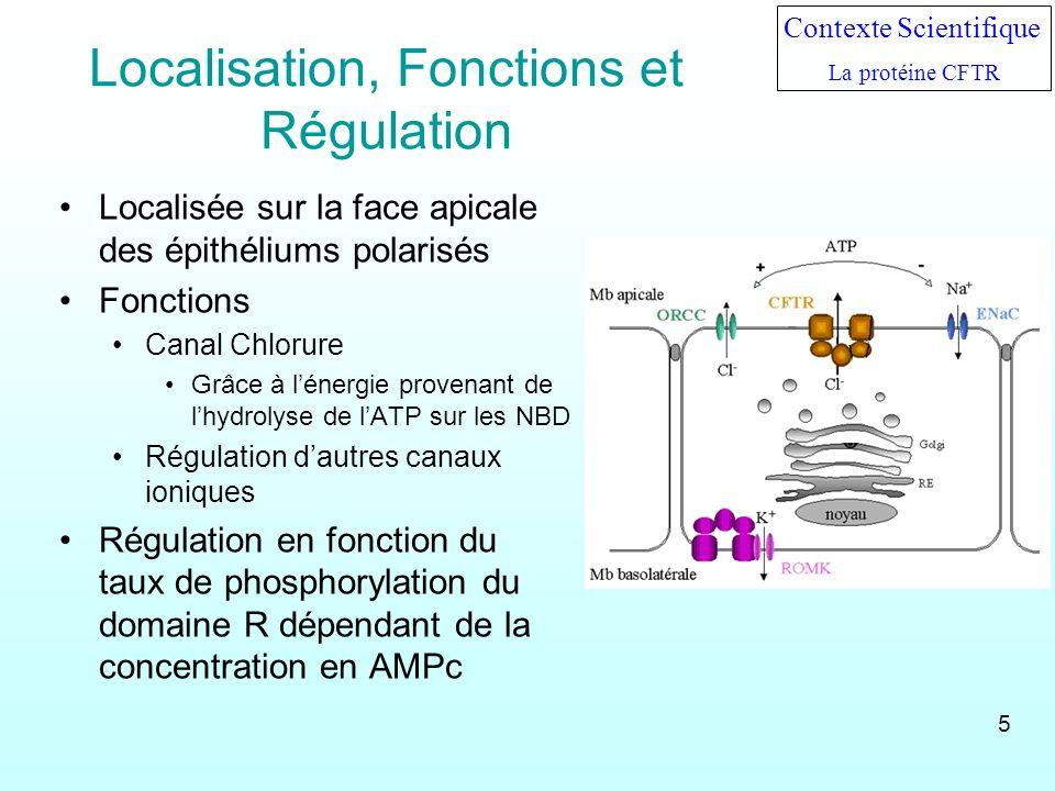 Localisation, Fonctions et Régulation Localisée sur la face apicale des épithéliums polarisés Fonctions Canal Chlorure Grâce à lénergie provenant de l
