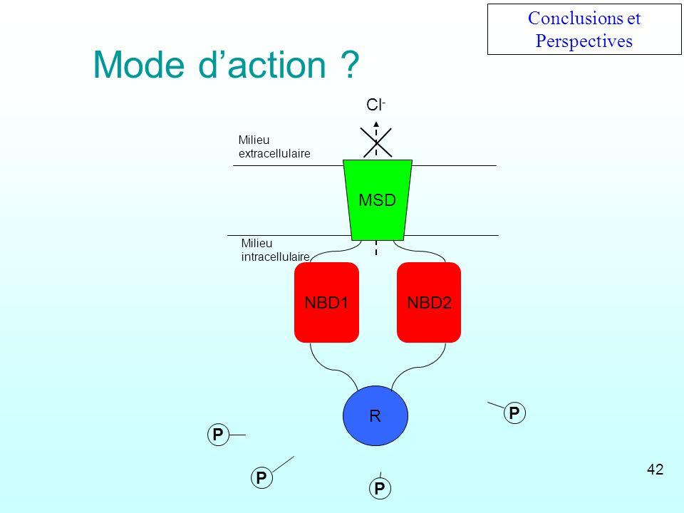 P Cl - MSD NBD1NBD2 R Milieu extracellulaire Milieu intracellulaire P PP Conclusions et Perspectives Mode daction ? 42