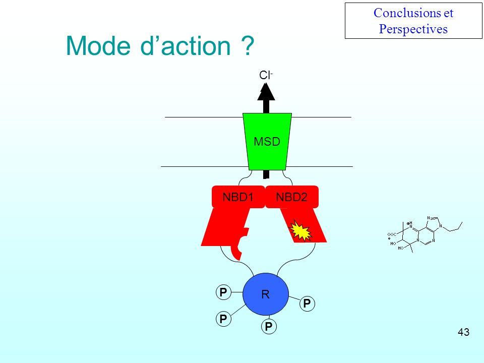 NBD1 R NBD2 Cl - MSD P PP P Conclusions et Perspectives Mode daction ? 43