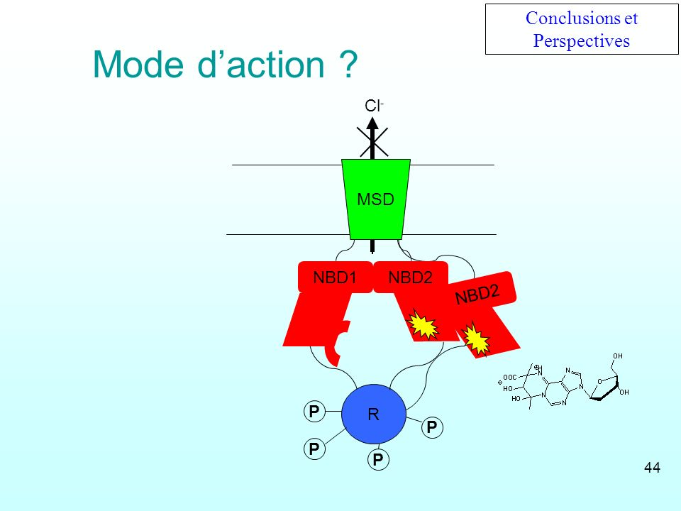 NBD2 NBD1 R Cl - NBD2 MSD P PP P Conclusions et Perspectives Mode daction ? 44