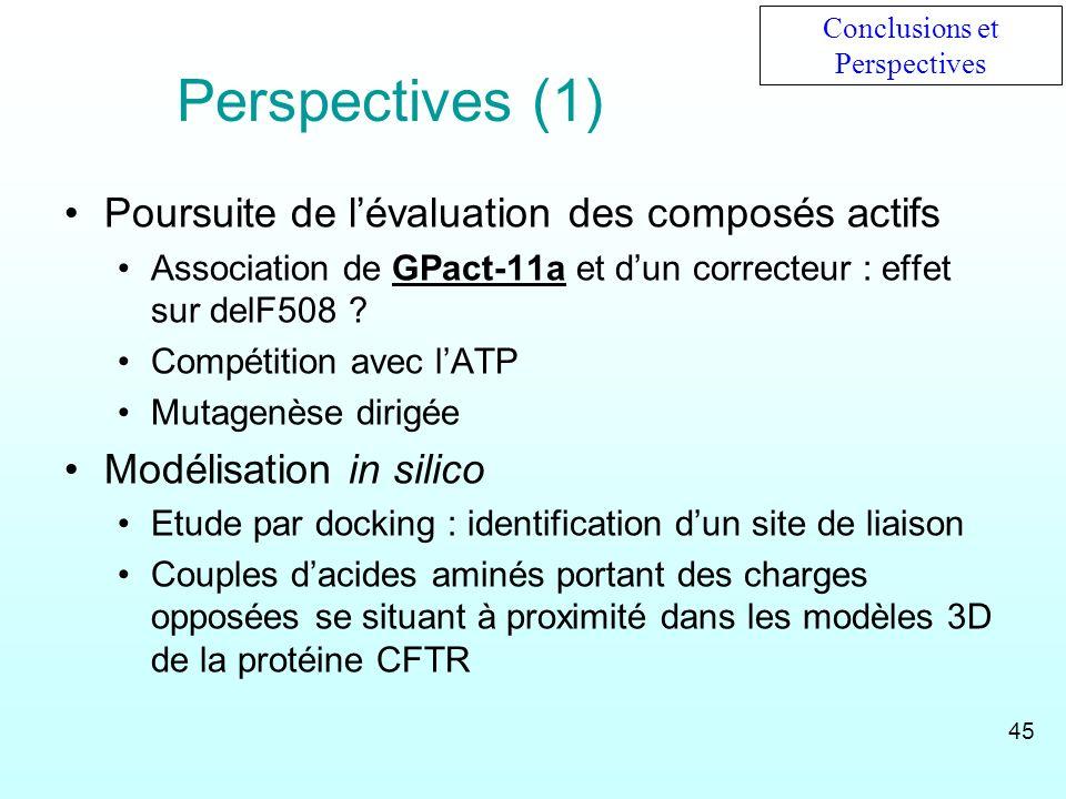 Perspectives (1) Poursuite de lévaluation des composés actifs Association de GPact-11a et dun correcteur : effet sur delF508 ? Compétition avec lATP M