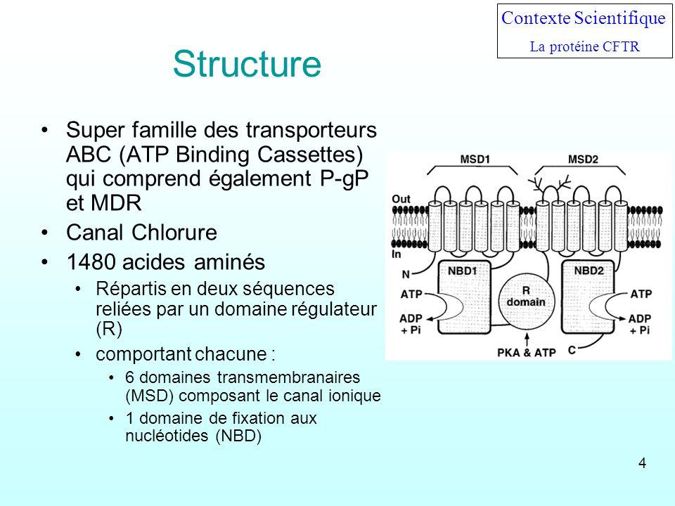 Structure Super famille des transporteurs ABC (ATP Binding Cassettes) qui comprend également P-gP et MDR Canal Chlorure 1480 acides aminés Répartis en