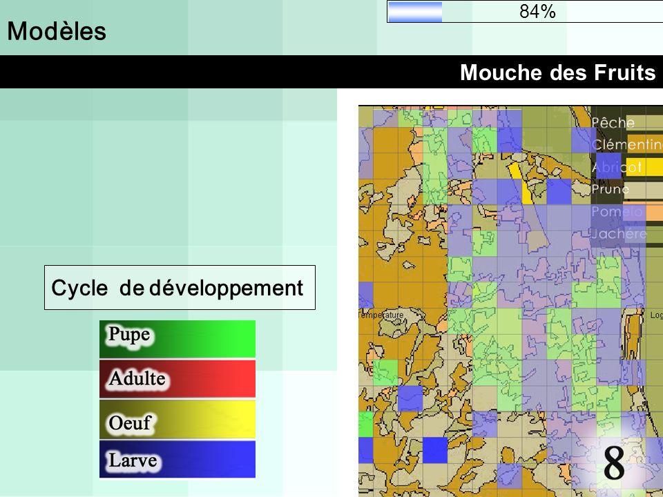 Modèles Mouche des Fruits 84% Cycle de développement