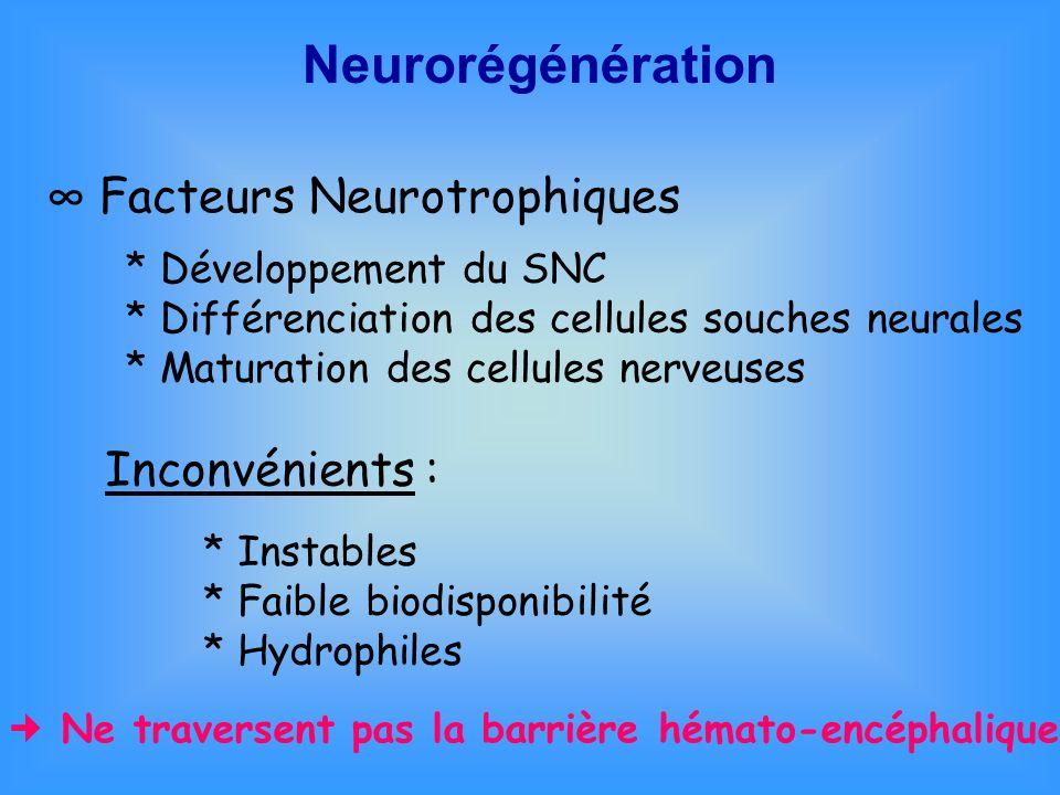 Neurorégénération Facteurs Neurotrophiques * Développement du SNC * Différenciation des cellules souches neurales * Maturation des cellules nerveuses