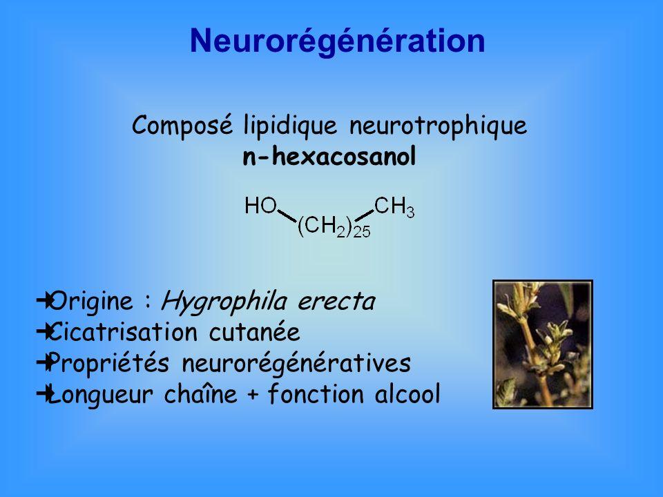 Neurorégénération Composé lipidique neurotrophique n-hexacosanol Origine : Hygrophila erecta Cicatrisation cutanée Propriétés neurorégénératives Longu