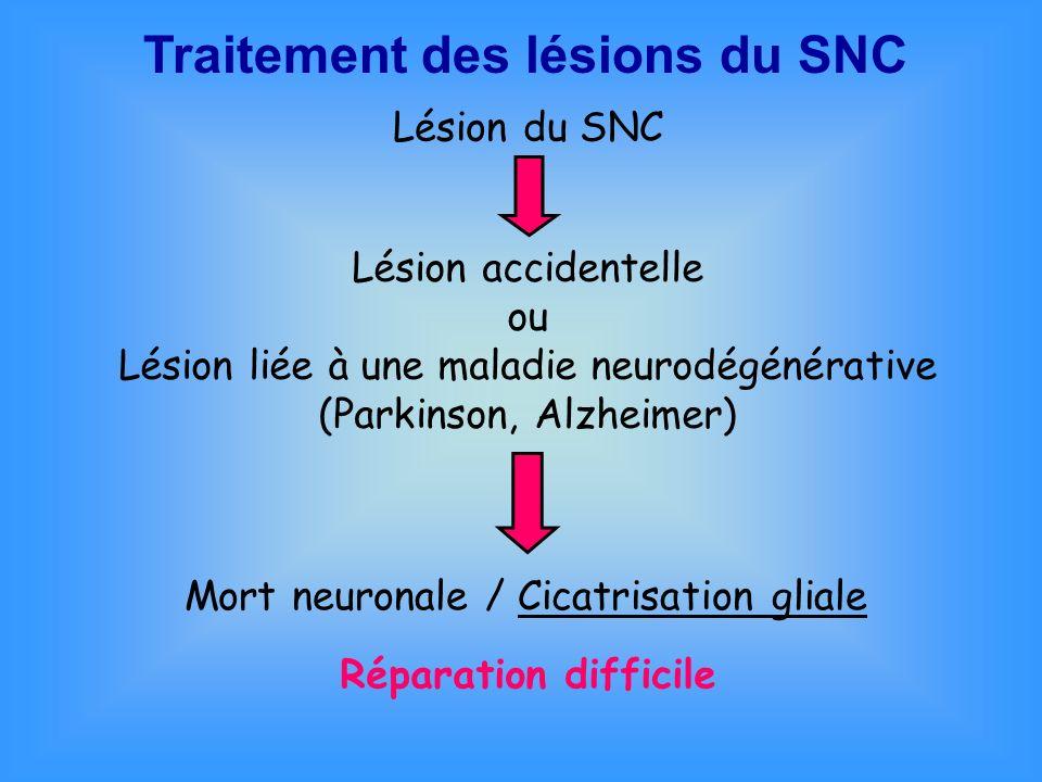 Traitement des lésions du SNC Mort neuronale / Cicatrisation gliale Réparation difficile Lésion du SNC Lésion accidentelle ou Lésion liée à une maladi