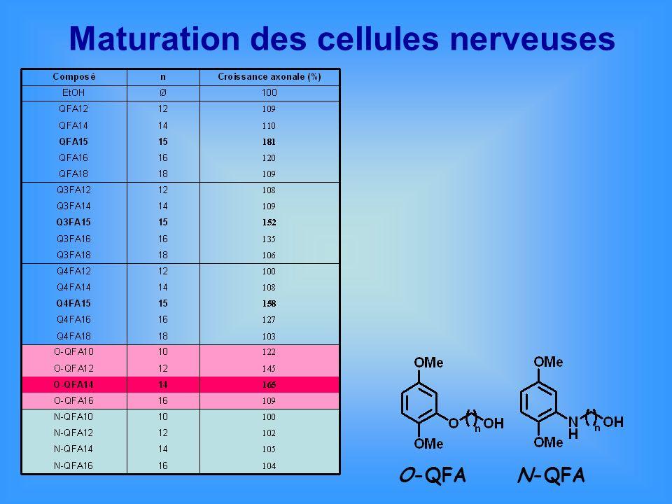 Maturation des cellules nerveuses O-QFAN-QFA