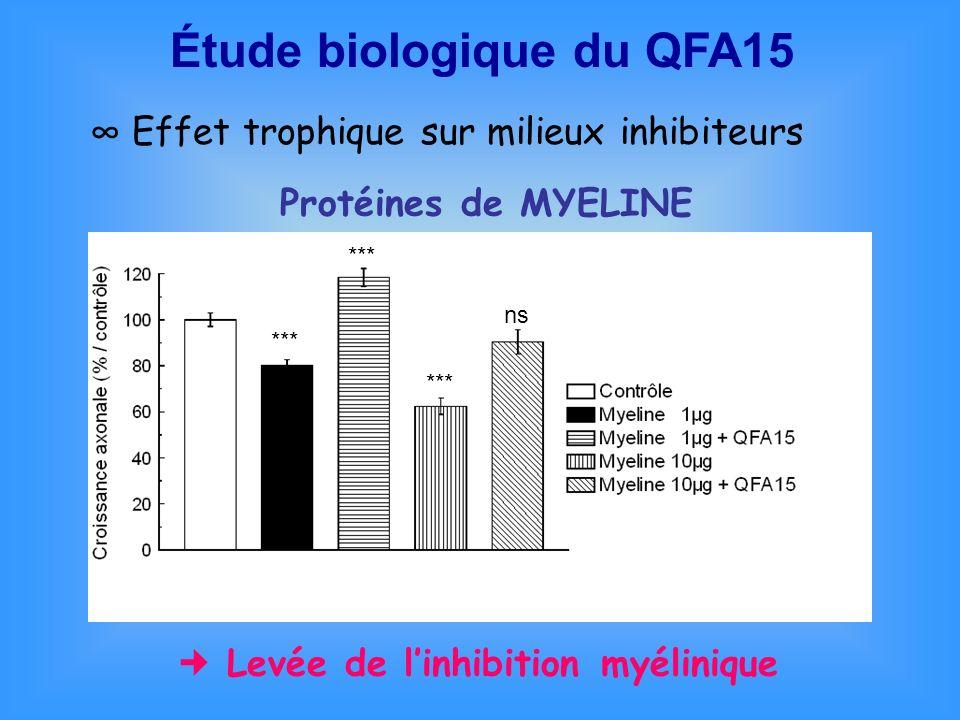 Effet trophique sur milieux inhibiteurs *** ns Protéines de MYELINE Levée de linhibition myélinique Étude biologique du QFA15
