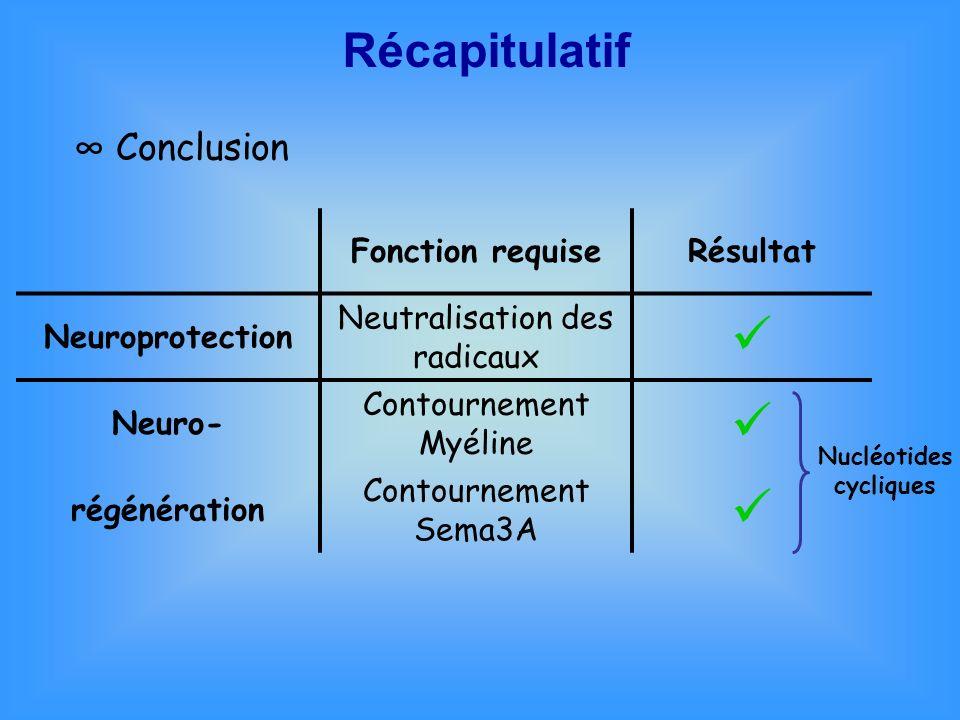 Conclusion Fonction requiseRésultat Neuroprotection Neutralisation des radicaux Neuro- Contournement Myéline régénération Contournement Sema3A Nucléot