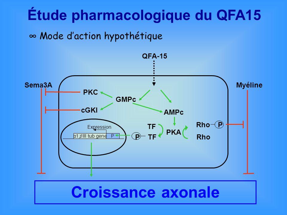Mode daction hypothétique Croissance axonale QFA-15 AMPc PKA Rho P Rho MyélineSema3A GMPc TF P TF α1; III tub gene P Expression PKC cGKI Étude pharmac