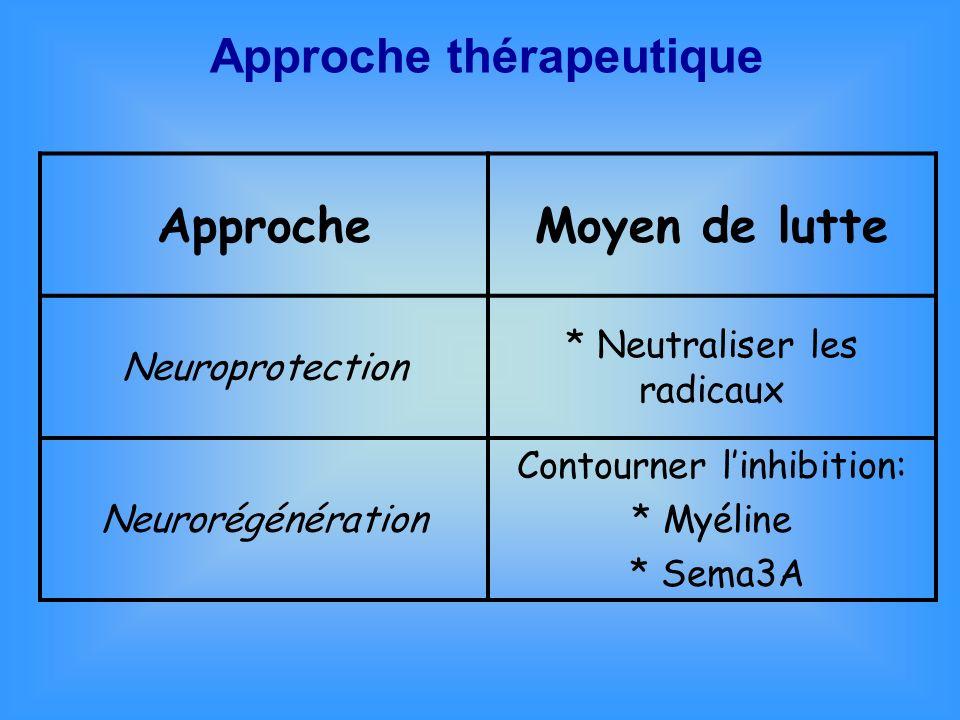 Approche thérapeutique Neurorégénération Neuroprotection * Limiter la mort neuronale Facteurs de croissance naturels * Réduire linflammation Anti-inflammatoires/antioxydants * Promouvoir la croissance et la régénération