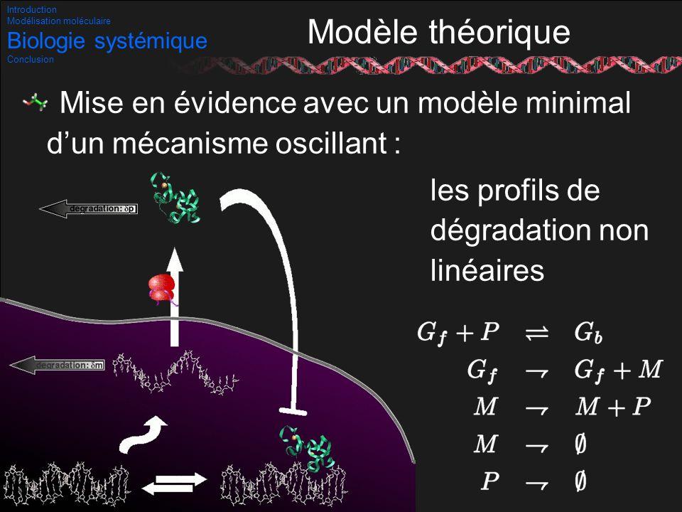 45/53 Modèle théorique Mise en évidence avec un modèle minimal dun mécanisme oscillant : les profils de dégradation non linéaires Introduction Modélis