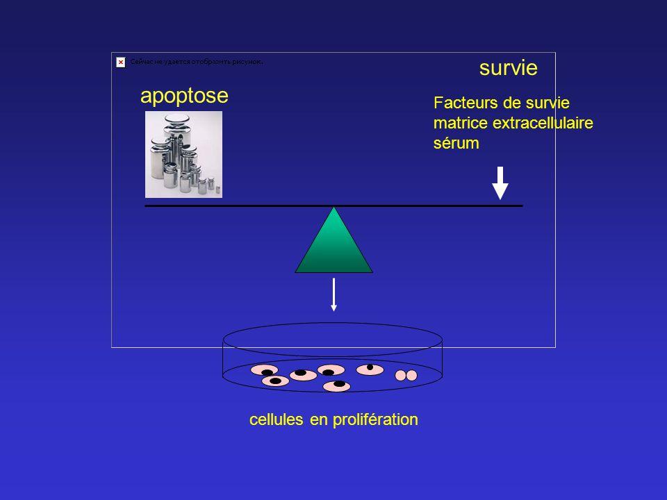 survie apoptose Facteurs de survie matrice extracellulaire sérum cellules en prolifération