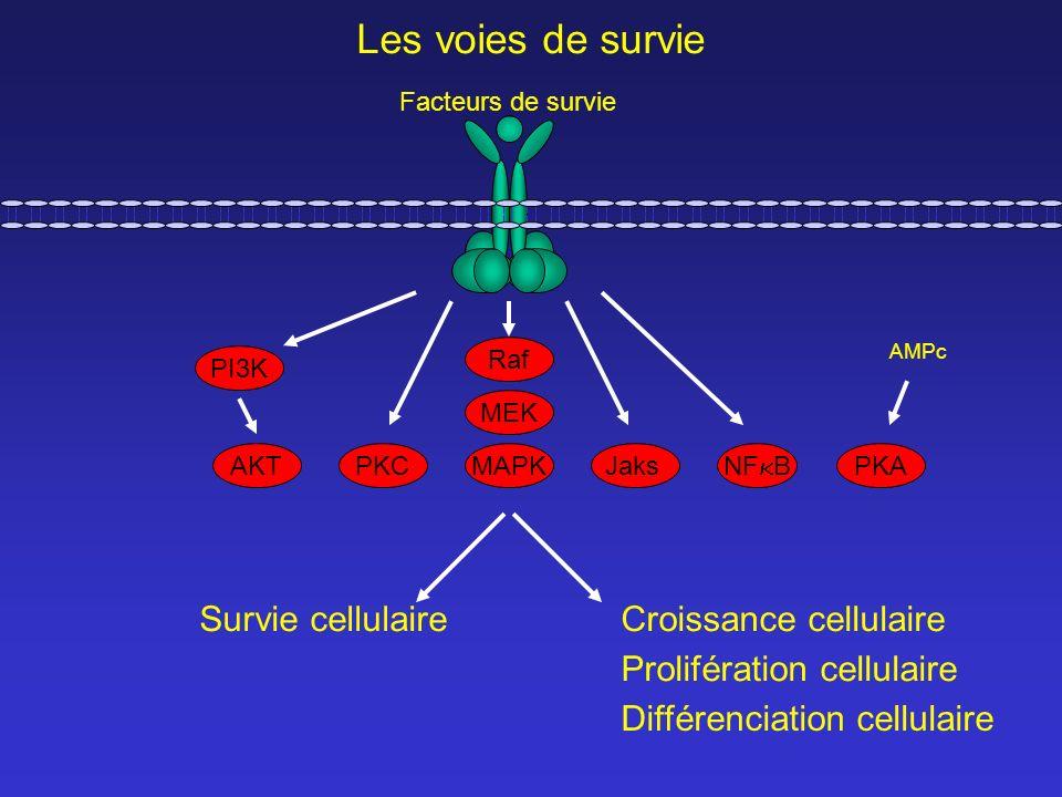 Survie cellulaire PI3K PKCMAPK MEK Raf PKA Jaks AKT AMPc Facteurs de survie Les voies de survie Croissance cellulaire Prolifération cellulaire Différe