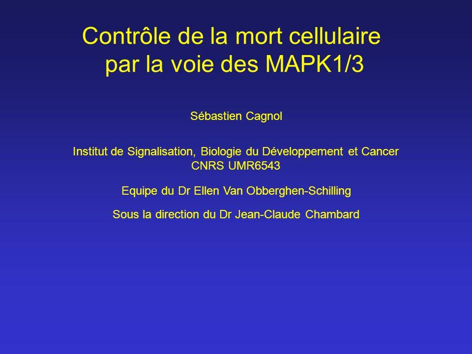 Contrôle de la mort cellulaire par la voie des MAPK1/3 Sébastien Cagnol Equipe du Dr Ellen Van Obberghen-Schilling Institut de Signalisation, Biologie
