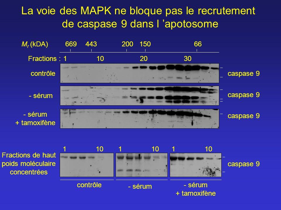 contrôle Fractions :1102030 66944320015066 M r (kDA) Fractions de haut poids moléculaire concentrées 1101 1 - sérum La voie des MAPK ne bloque pas le