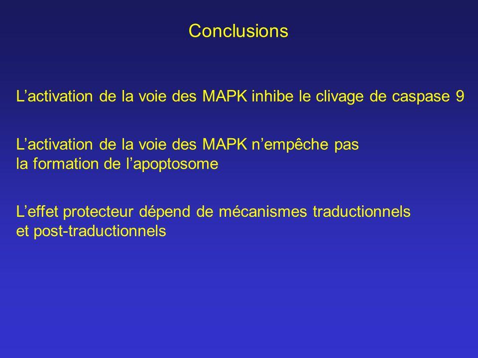 Conclusions Lactivation de la voie des MAPK inhibe le clivage de caspase 9 Leffet protecteur dépend de mécanismes traductionnels et post-traductionnel