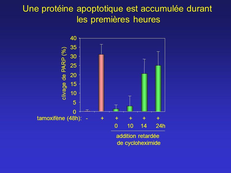 tamoxifène (48h): 10 30 35 40 25 20 15 5 1424h10 clivage de PARP (%) 0 Une protéine apoptotique est accumulée durant les premières heures addition ret