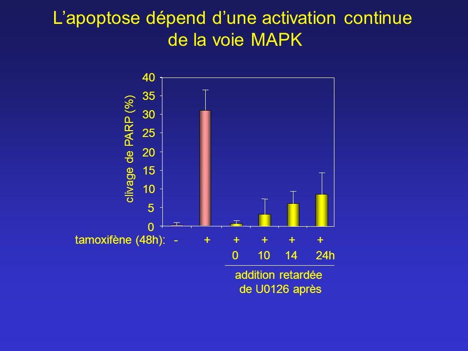 tamoxifène (48h): 10 30 35 40 25 20 15 5 1424h10 0 0 -+++++ addition retardée de U0126 après Lapoptose dépend dune activation continue de la voie MAPK