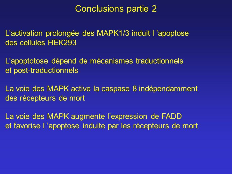 Conclusions partie 2 Lactivation prolongée des MAPK1/3 induit l apoptose des cellules HEK293 La voie des MAPK active la caspase 8 indépendamment des r