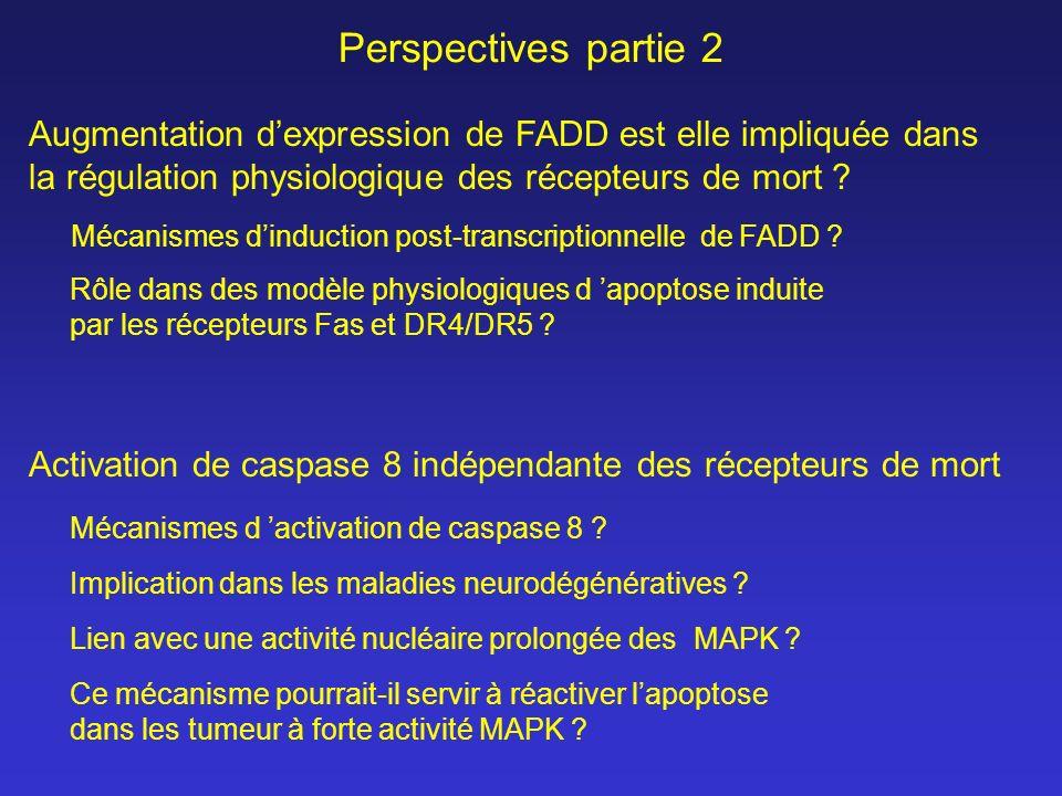 Perspectives partie 2 Activation de caspase 8 indépendante des récepteurs de mort Augmentation dexpression de FADD est elle impliquée dans la régulati