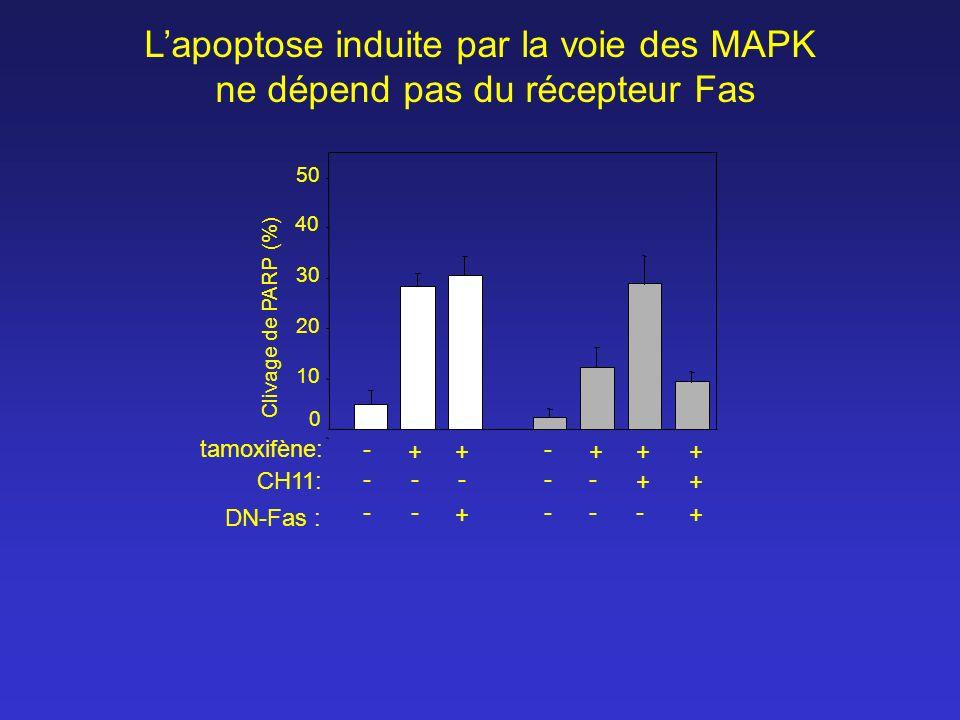 Clivage de PARP (%) 0 10 20 30 40 50 tamoxifène: - +++++ - CH11: ---- ++ - DN-Fas : -- + -- + - Lapoptose induite par la voie des MAPK ne dépend pas d
