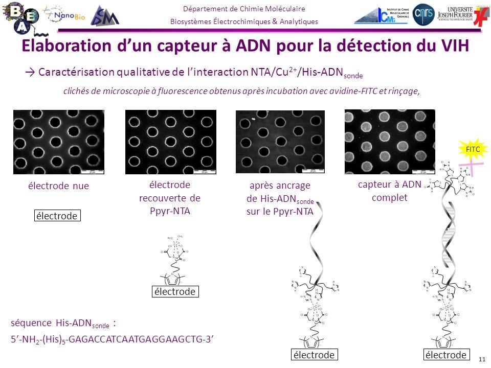 Département de Chimie Moléculaire Biosystèmes Électrochimiques & Analytiques capteur à ADN complet électrode nue électrode recouverte de Ppyr-NTA après ancrage de His-ADN sonde sur le Ppyr-NTA Elaboration dun capteur à ADN pour la détection du VIH Caractérisation qualitative de linteraction NTA/Cu 2+ /His-ADN sonde clichés de microscopie à fluorescence obtenus après incubation avec avidine-FITC et rinçage, 11 séquence His-ADN sonde : 5-NH 2 -(His) 5 -GAGACCATCAATGAGGAAGCTG-3 électrode FITC électrode
