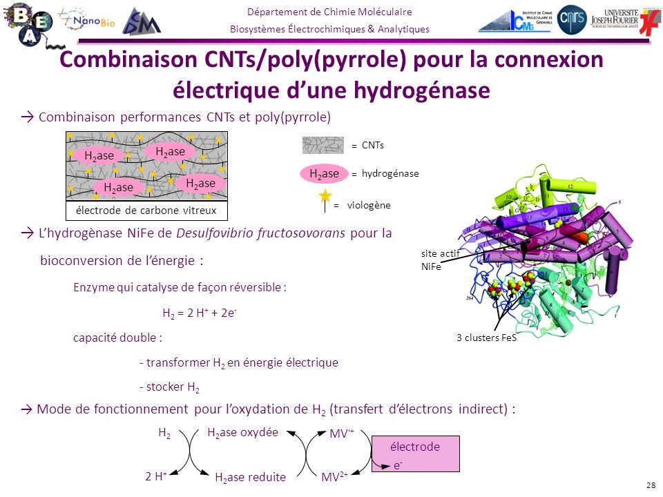 Département de Chimie Moléculaire Biosystèmes Électrochimiques & Analytiques 3 clusters FeS site actif NiFe Lhydrogènase NiFe de Desulfovibrio fructosovorans pour la bioconversion de lénergie : Combinaison CNTs/poly(pyrrole) pour la connexion électrique dune hydrogénase Enzyme qui catalyse de façon réversible : H 2 = 2 H + + 2e - capacité double : - transformer H 2 en énergie électrique - stocker H 2 Mode de fonctionnement pour loxydation de H 2 (transfert délectrons indirect) : électrode H2H2 2 H + H 2 ase oxydée H 2 ase reduite MV 2+ MV ·+ e-e- 28 Combinaison performances CNTs et poly(pyrrole) H 2 ase électrode de carbone vitreux H 2 ase hydrogénase = viologène = CNTs =
