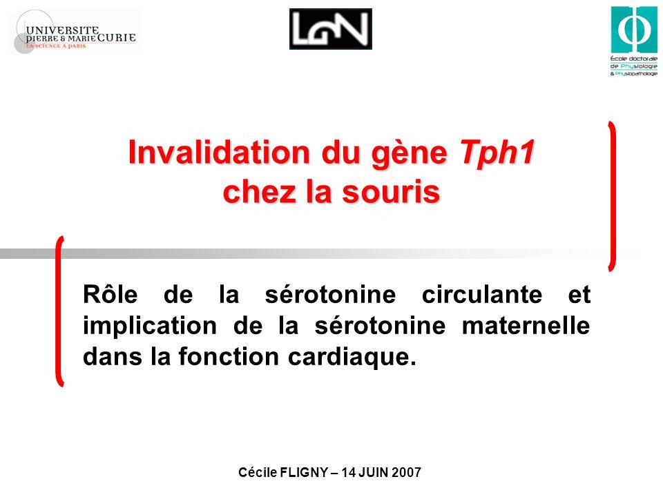 Modification de la signalisation 5-HT cardiaque Tph1 -/- (+/-) 3-15% Étude de liaison des récepteurs -adrénergiques cardiaques Tph1 +/+ Tph1 -/- Kd (nmol/l) 0.03 ± 0.000.045 ± 0.02 Bmax (fmol/mg prot.) 39.66 ± 2.24 42.42 ± 3.08 β 1 /β 2 (%) 51 ± 49 52 ± 48 Tph1 +/+ Tph1 -/- 5-HT 2A (fmol/mg prot.) 6751 5-HT 2B (fmol/mg prot.) 107211 SERT (fmol/mg prot.) 1357 Ø modification de la signalisation -AR.