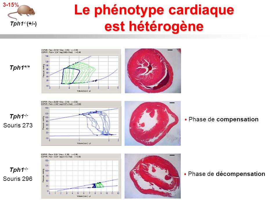 Le phénotype cardiaque est hétérogène Phase de compensation Tph1 -/- (+/-) 3-15% Tph1 +/+ Tph1 -/- Souris 273 Phase de décompensation Tph1 -/- Souris