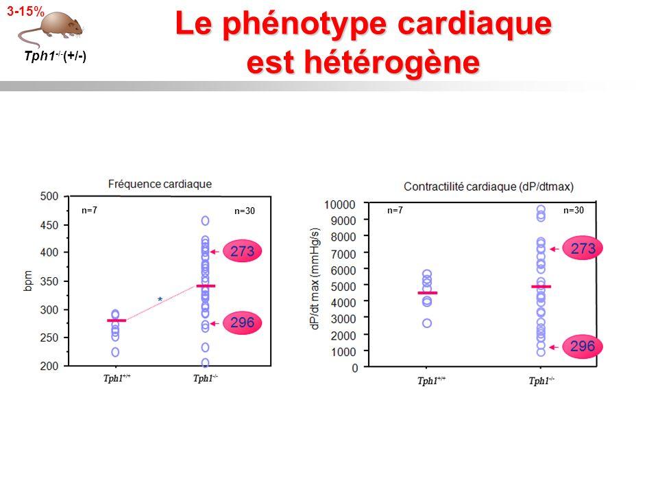 Le phénotype cardiaque est hétérogène Tph1 -/- (+/-) 3-15% n=30n=7 n=30 n=7