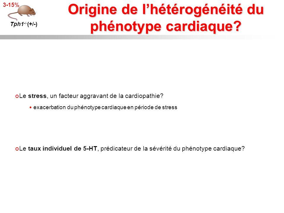 Origine de lhétérogénéité du phénotype cardiaque? Tph1 -/- (+/-) 3-15% Le stress, un facteur aggravant de la cardiopathie? exacerbation du phénotype c