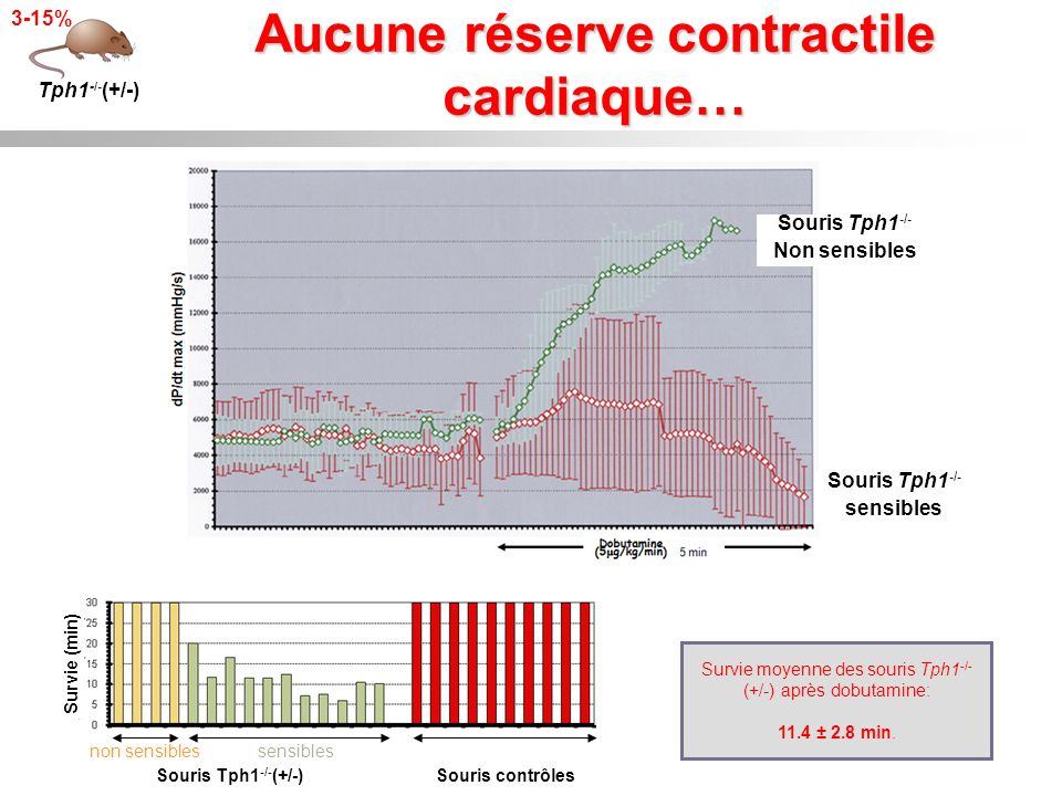 Aucune réserve contractile cardiaque… Tph1 -/- (+/-) 3-15% Survie (min) Souris Tph1 -/- (+/-) non sensiblessensibles Souris contrôles Survie moyenne d