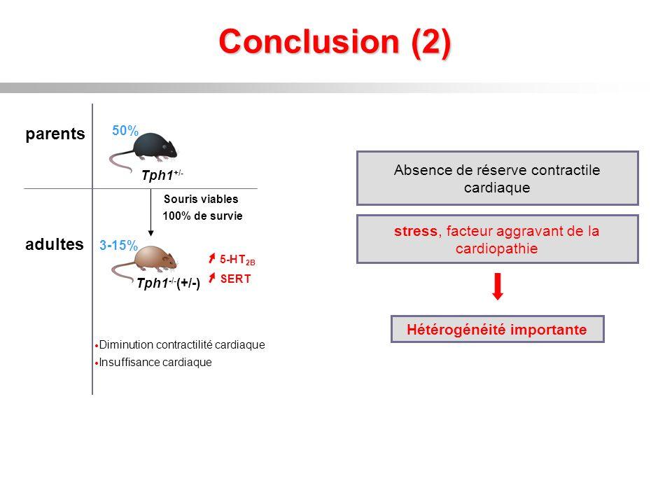 Conclusion (2) parents adultes 100% de survie Souris viables Tph1 -/- (+/-) 3-15% 50% Tph1 +/- Absence de réserve contractile cardiaque Hétérogénéité