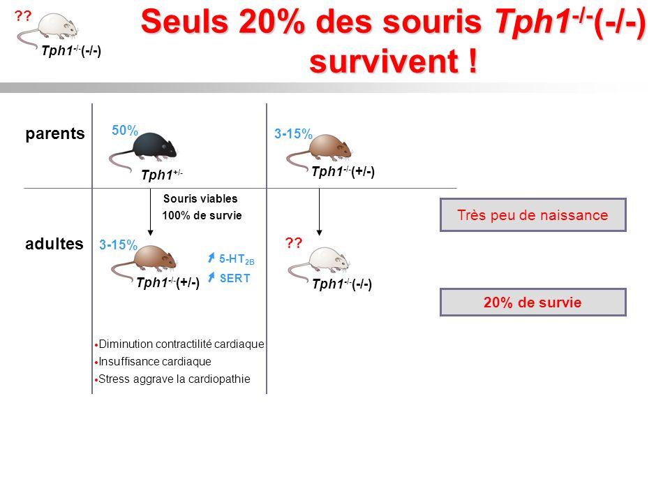 Seuls 20% des souris Tph1 -/- (-/-) survivent ! parents adultes 100% de survie Souris viables Tph1 -/- (+/-) 3-15% 50% Tph1 +/- 5-HT 2B SERT Tph1 -/-