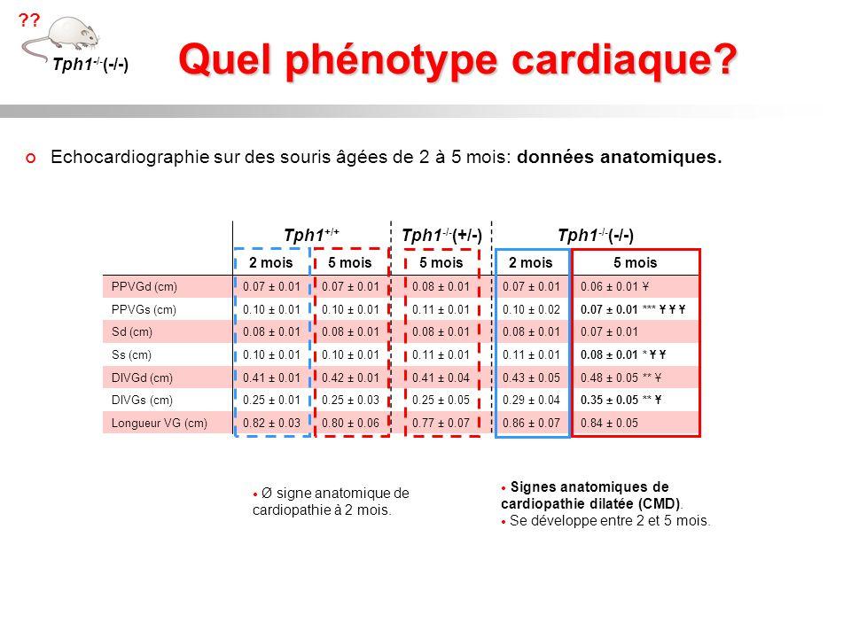 Quel phénotype cardiaque? Tph1 +/+ Tph1 -/- (+/-)Tph1 -/- (-/-) 2 mois5 mois 2 mois5 mois PPVGd (cm)0.07 ± 0.01 0.08 ± 0.010.07 ± 0.010.06 ± 0.01 Ұ PP