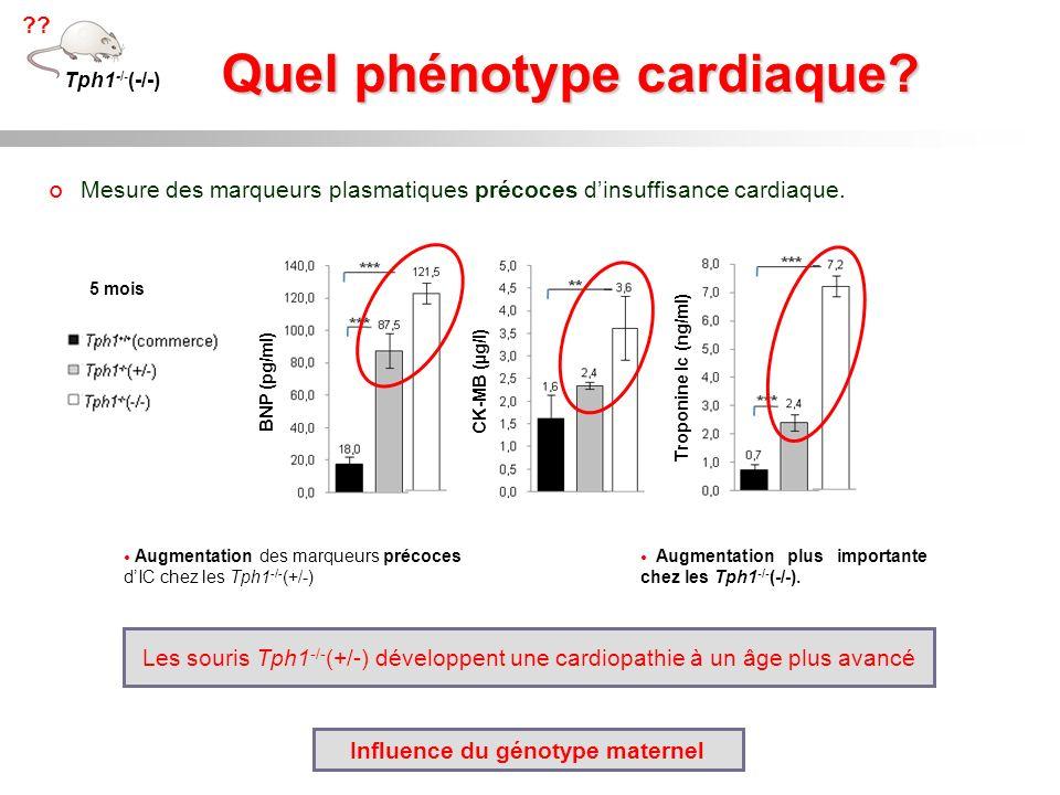 Quel phénotype cardiaque? Mesure des marqueurs plasmatiques précoces dinsuffisance cardiaque. 5 mois Tph1 -/- (-/-) ?? BNP (pg/ml) CK-MB (µg/l) Tropon