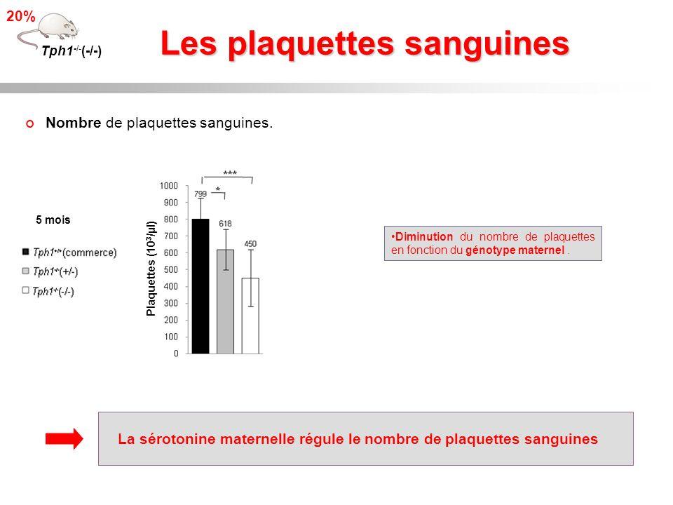 Les plaquettes sanguines Tph1 -/- (-/-) 20% Diminution du nombre de plaquettes en fonction du génotype maternel. 5 mois Plaquettes (10 3 /µl) Nombre d