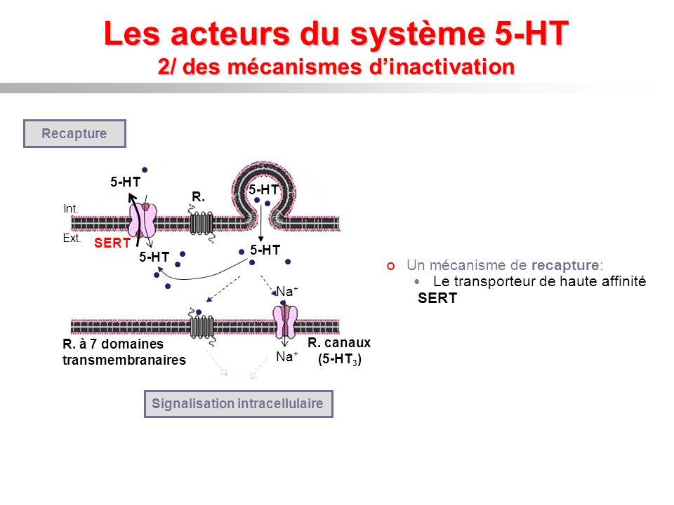 Les acteurs du système 5-HT 2/ des mécanismes dinactivation Na + R. à 7 domaines transmembranaires R. canaux (5-HT 3 ) Signalisation intracellulaire U