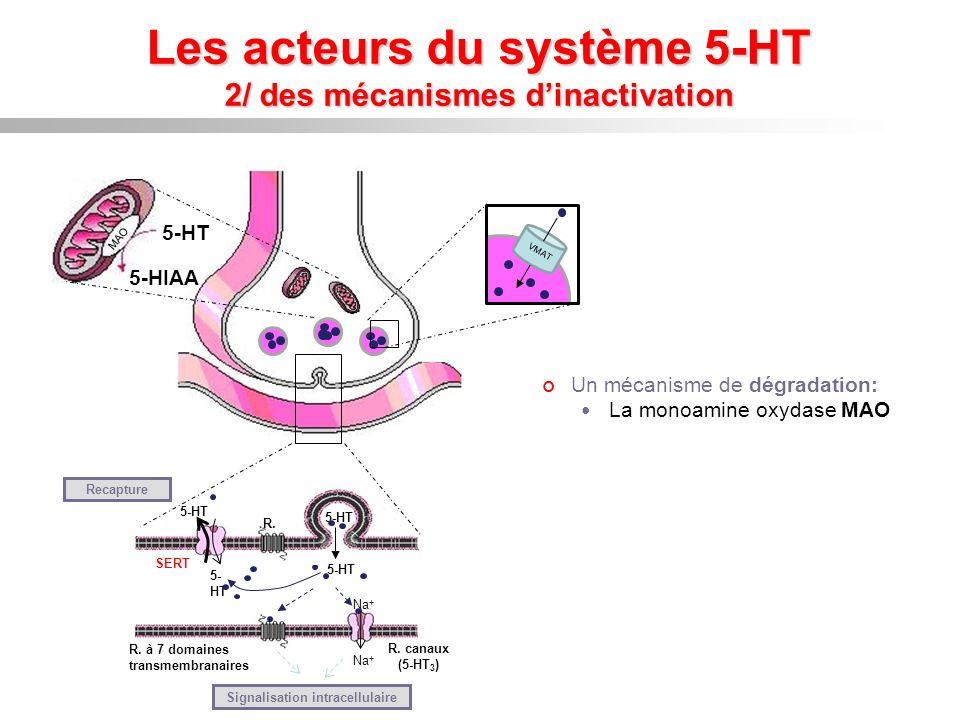 Les acteurs du système 5-HT 3/ une enzyme de synthèse limitante: la TPH Enzyme limitante de la voie de biosynthèse de la 5-HT tryptophane Décarboxylase des aa aromatiques 5-hydroxytryptamine SÉROTONINE noyaux du raphé neurones myentériques cellules entérochromaffines Mélatonine glande pinéale 5-hydroxytryptophane 5-HTP Tryptophane hydroxylase
