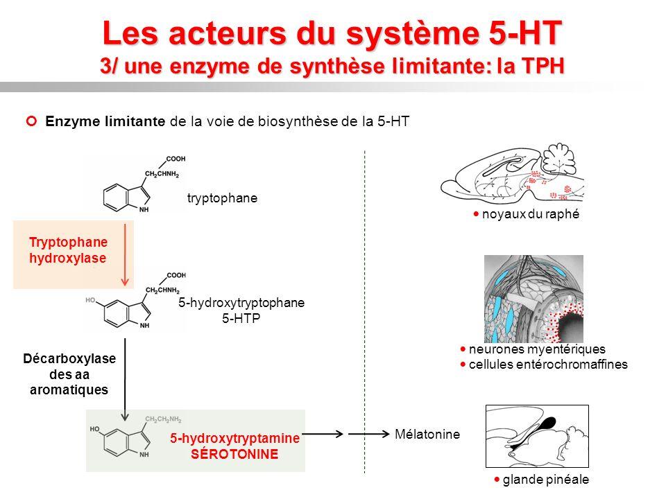 Les acteurs du système 5-HT 3/ une enzyme de synthèse limitante: la TPH Enzyme limitante de la voie de biosynthèse de la 5-HT tryptophane Décarboxylas