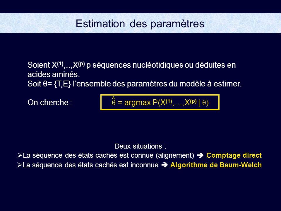 Estimation des paramètres Soient X (1),..,X (p) p séquences nucléotidiques ou déduites en acides aminés.