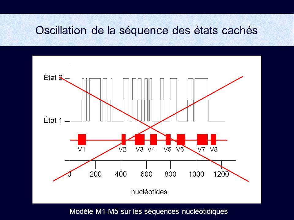 V5V1V2V6V7V8V3 V4 200400800100012000600 État 2 État 1 nucléotides Modèle M1-M5 sur les séquences nucléotidiques Oscillation de la séquence des états cachés
