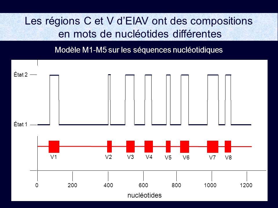 Les régions C et V dEIAV ont des compositions en mots de nucléotides différentes 200400800100012000600 État 2 État 1 nucléotides V5 V1V2 V6V7V8 V3 V4 Modèle M1-M5 sur les séquences nucléotidiques