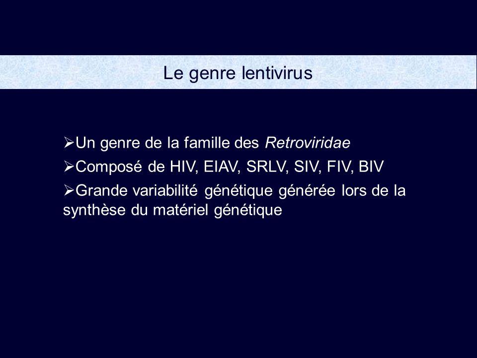 Le genre lentivirus Un genre de la famille des Retroviridae Composé de HIV, EIAV, SRLV, SIV, FIV, BIV Grande variabilité génétique générée lors de la synthèse du matériel génétique