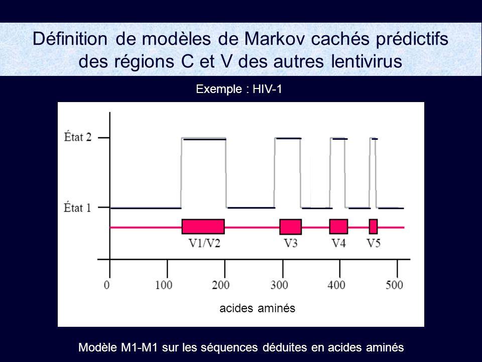 Définition de modèles de Markov cachés prédictifs des régions C et V des autres lentivirus Exemple : HIV-1 Modèle M1-M1 sur les séquences déduites en acides aminés acides aminés