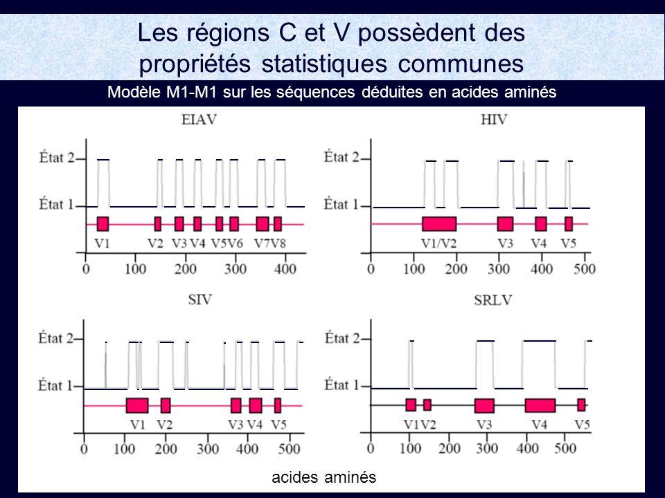 Les régions C et V possèdent des propriétés statistiques communes acides aminés Modèle M1-M1 sur les séquences déduites en acides aminés