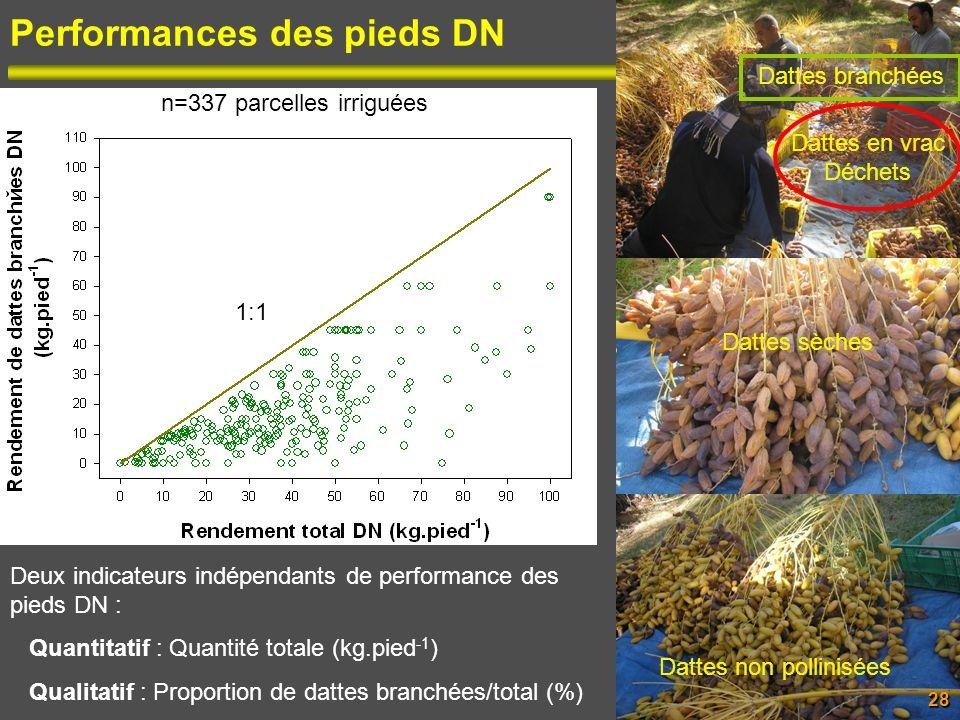 Performances des pieds DN Dattes non pollinisées Dattes sèches Dattes en vrac Déchets Dattes branchées 28 1:1 Deux indicateurs indépendants de perform