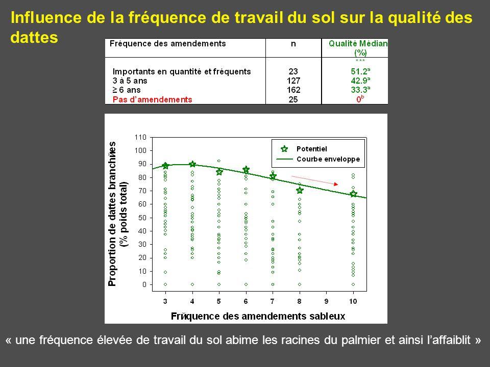 Influence de la fréquence de travail du sol sur la qualité des dattes « une fréquence élevée de travail du sol abime les racines du palmier et ainsi l